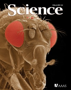 fruit-fly_science_052010