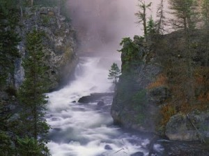 The Firehole River is full of pure, naturally occurring fluoride 12 mg/L, a truly dangerous level. Photo by Larry Grant